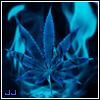 Jay_Jay